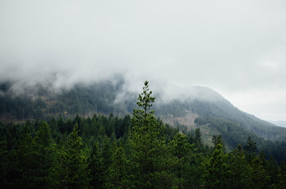 Mountain, Pine Tree, Natural