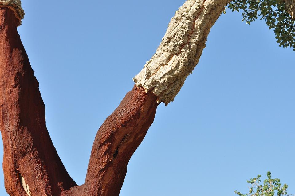 Cork Oak, Cork, Natural Product, Tree Bark, Shed Bark