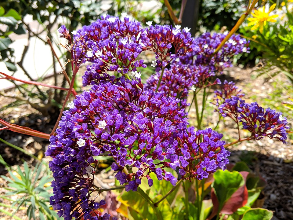 Purple Flowers, Natural