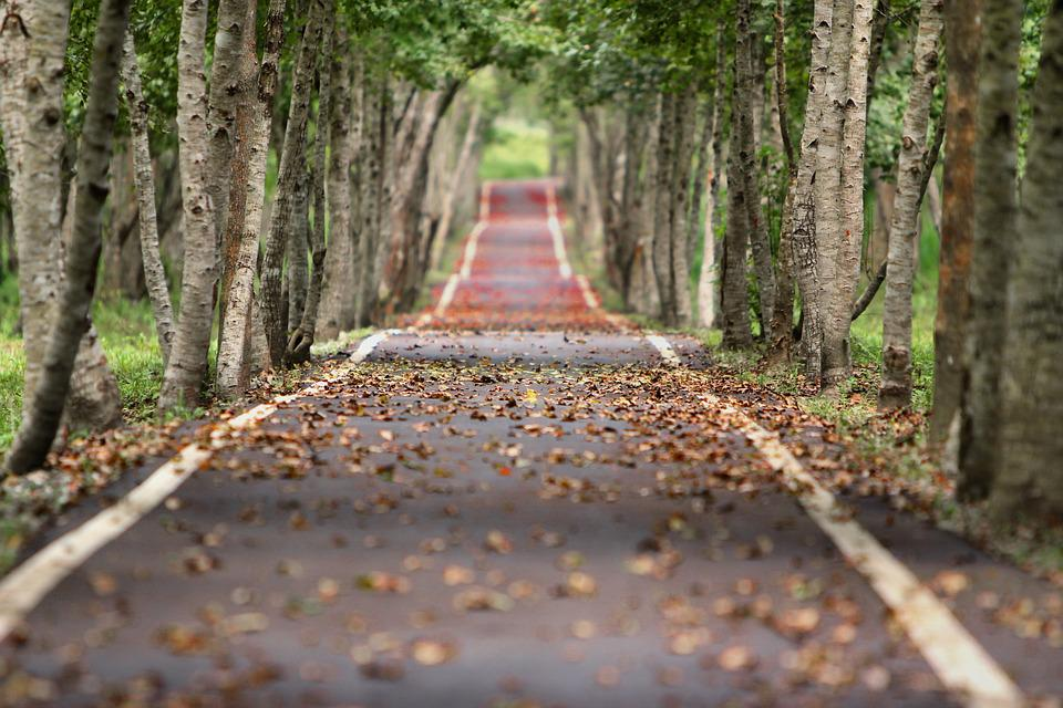 Woodland, Road, Falling Leaf, Natural, Tree Wood