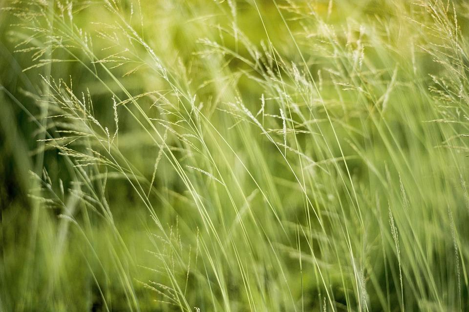 Natural, Green, Nature, Leaf, Plant, Spring, Fresh