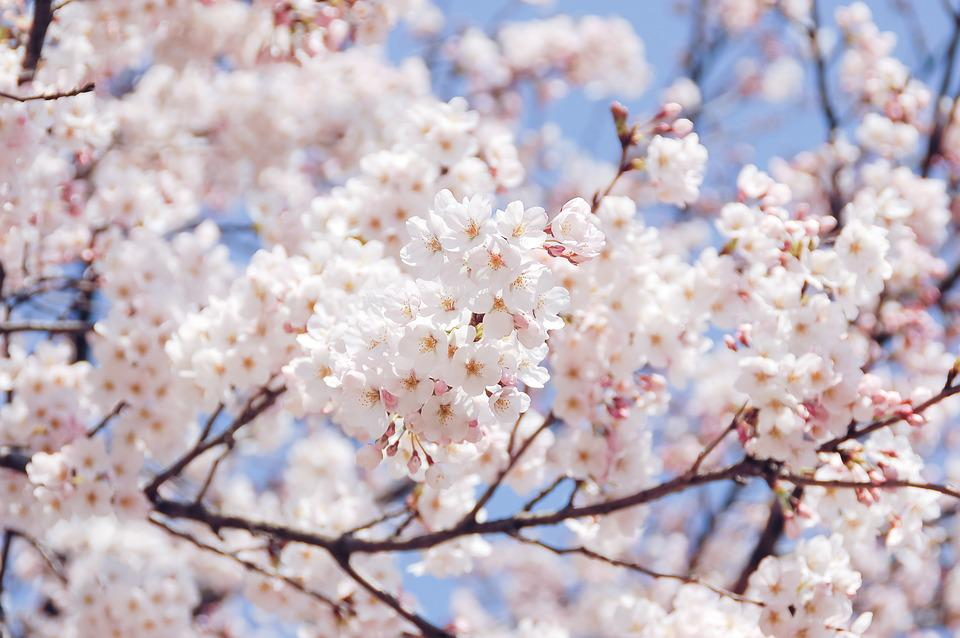 Natural, Landscape, Plant, Flowers, Spring