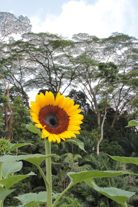 Wildflower, Flower, Sunflower, Floral, Plant, Natural