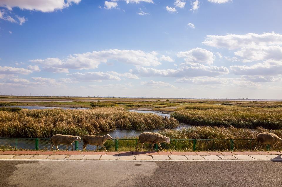 Prairie, Wetlands, The Scenery, Natural, Plant