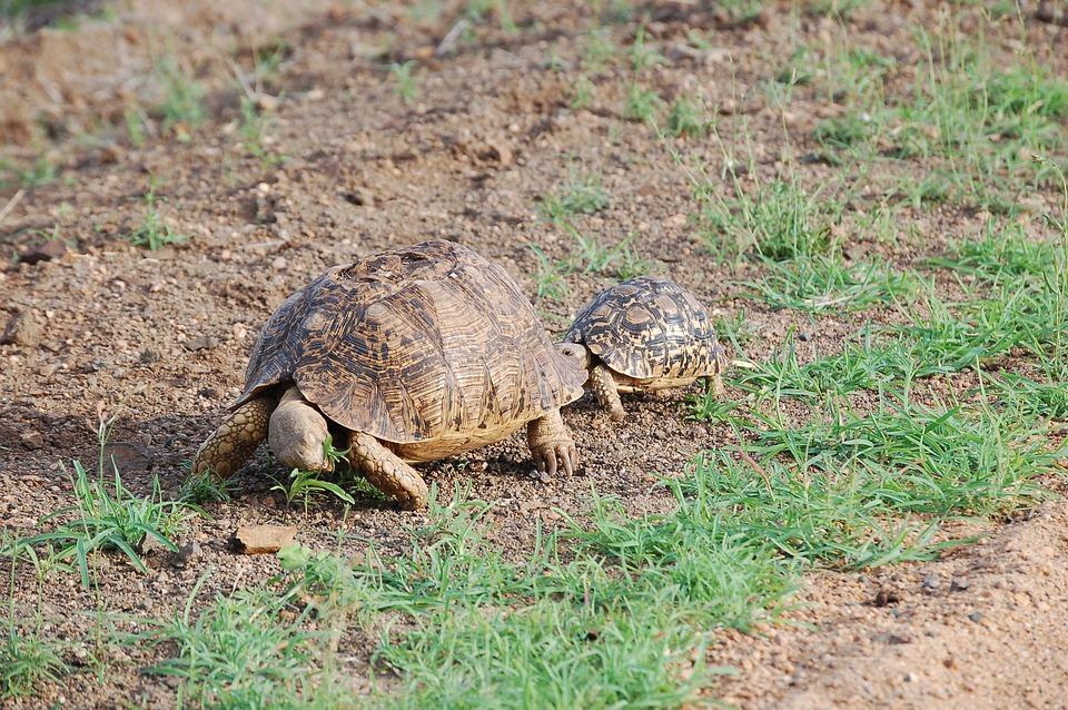Tortoise, Wild, Animal, Landscape, Natural