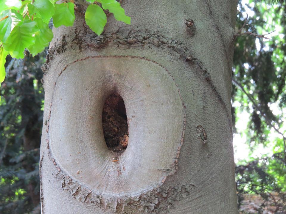 Knothole, Tree, Natural Tree Trunk