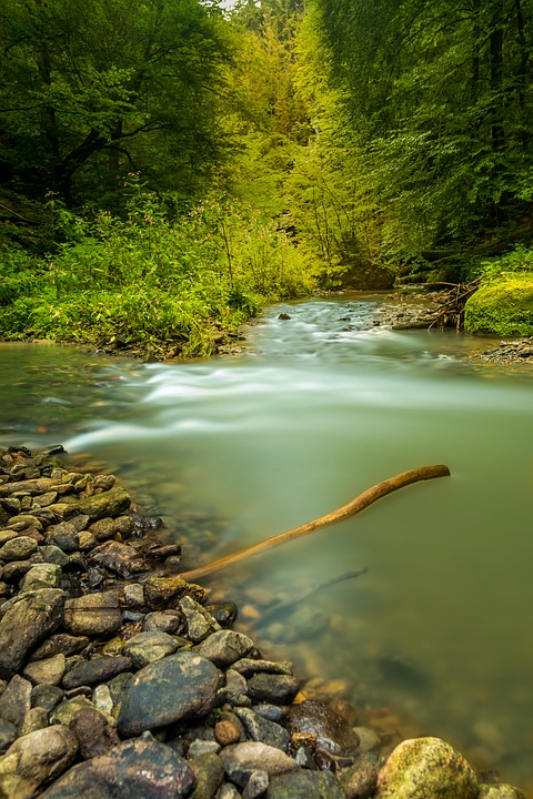 Nature, Water, Bach, Landscape, Natural Water, Forest