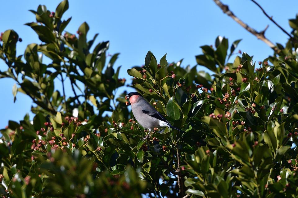 Natural, Wood, Outdoors, Bird, Sky, Free