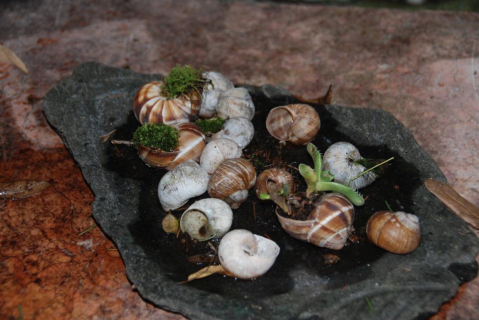 Snails, Naturdeko, Shell