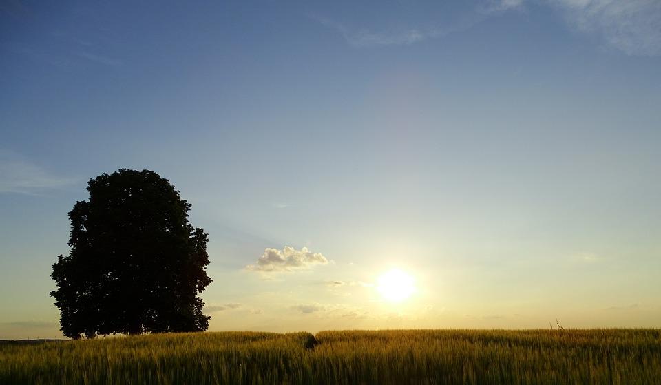 Tree, Oberschönenfeld, Abendstimmung, Nature, Landscape