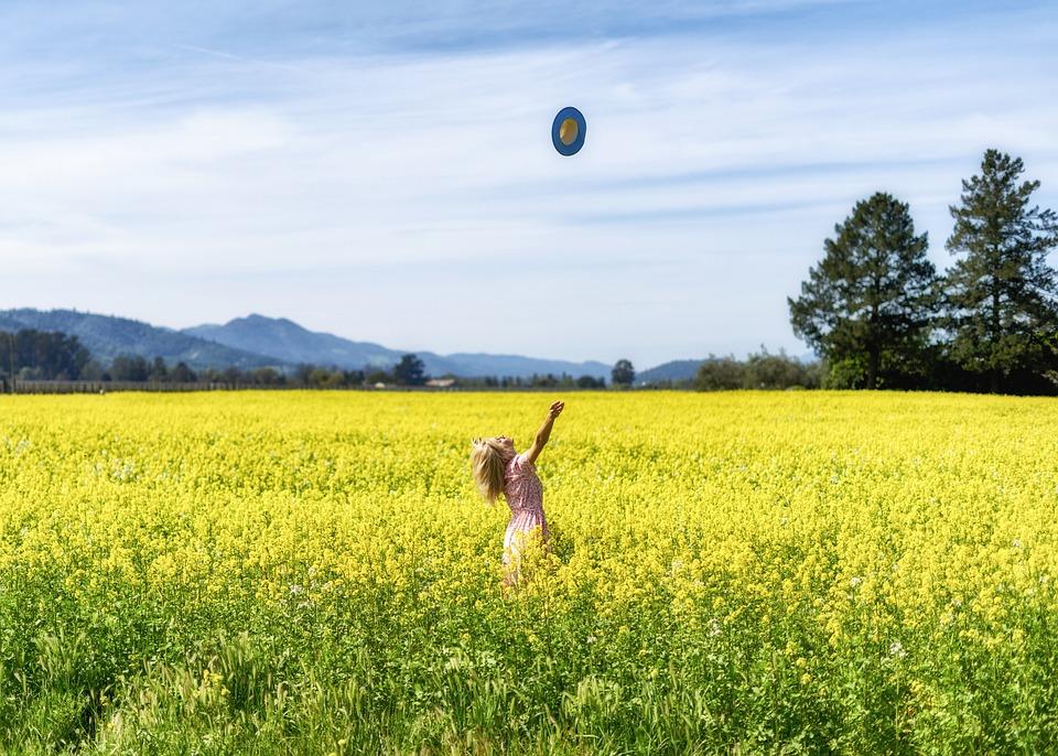 Field, Nature, Landscape, Summer, Agriculture, Napa