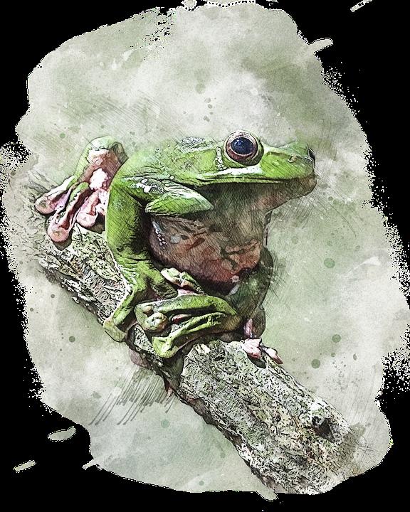 Wildlife, Green Frog, Animal, Amphibian, Nature, Small