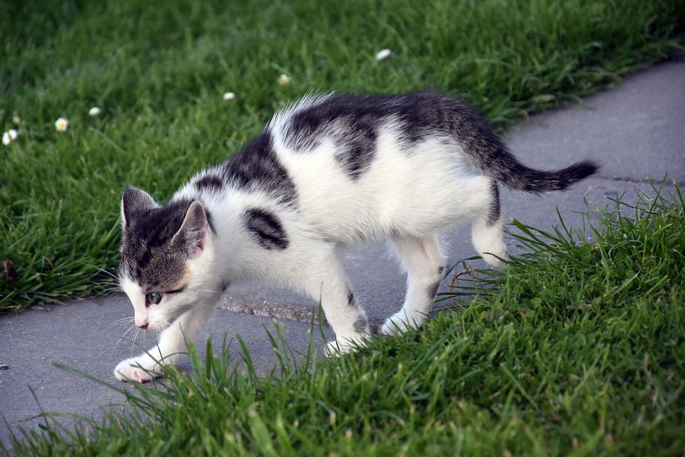 Grass, Animal, Cute, Mammal, Cat, Adorable, Nature, Pet