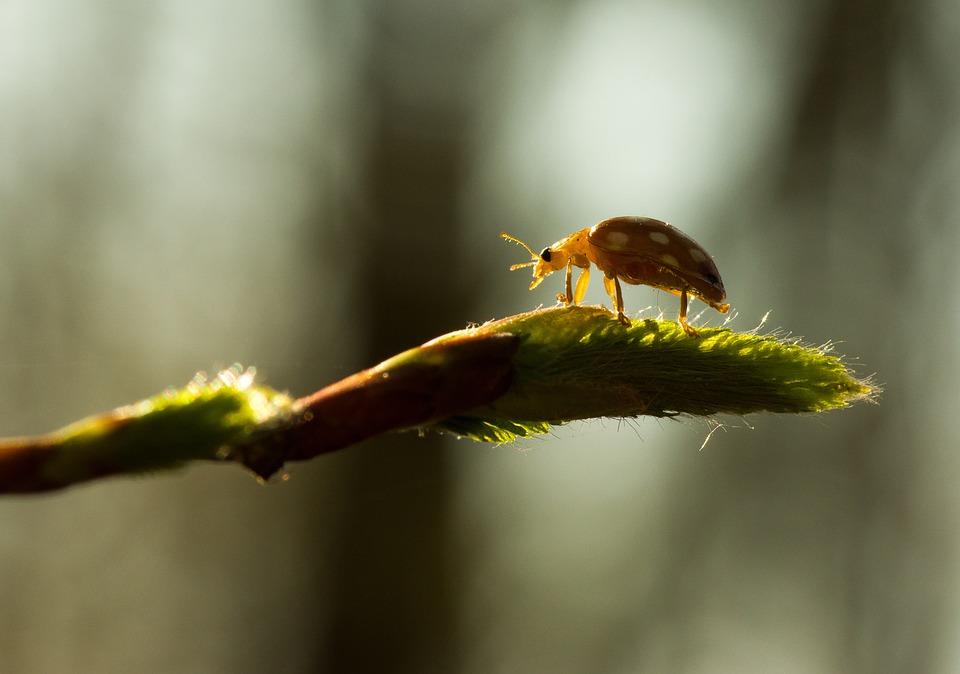 Insect, Nature, Animal World, Animal, Close, Plant