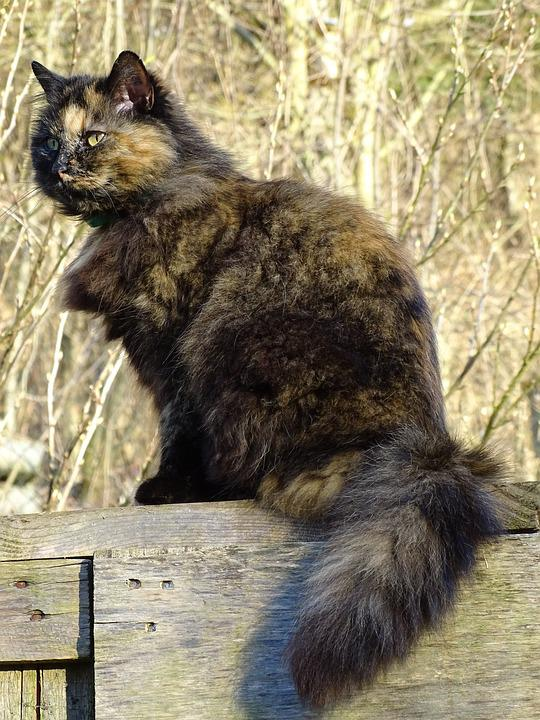 Mammal, Animal, Cute, Nature, Fur