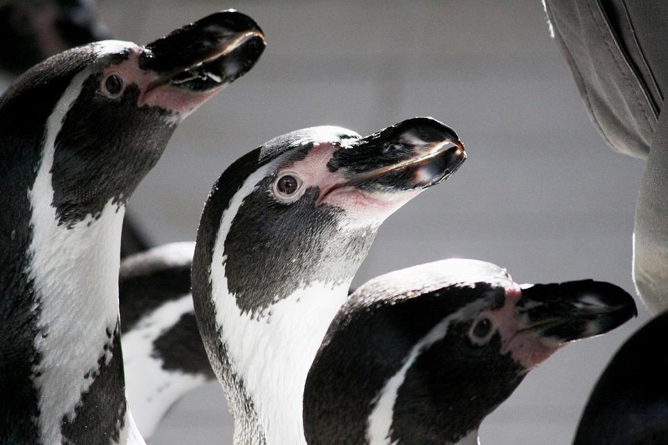 Fauna, Bird, Animal, Nature