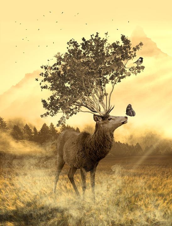 Hirsch, Tree, Forest, Wild, Animal Kingdom, Nature