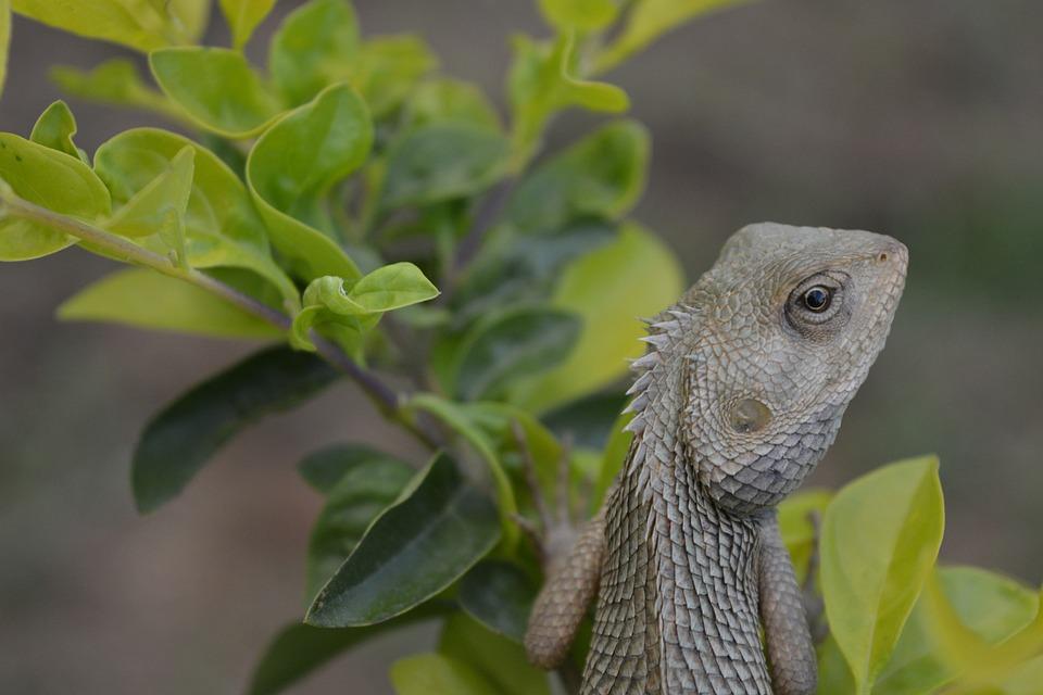 Nature, Leaf, Outdoors, Wildlife, Chameleon, Animal
