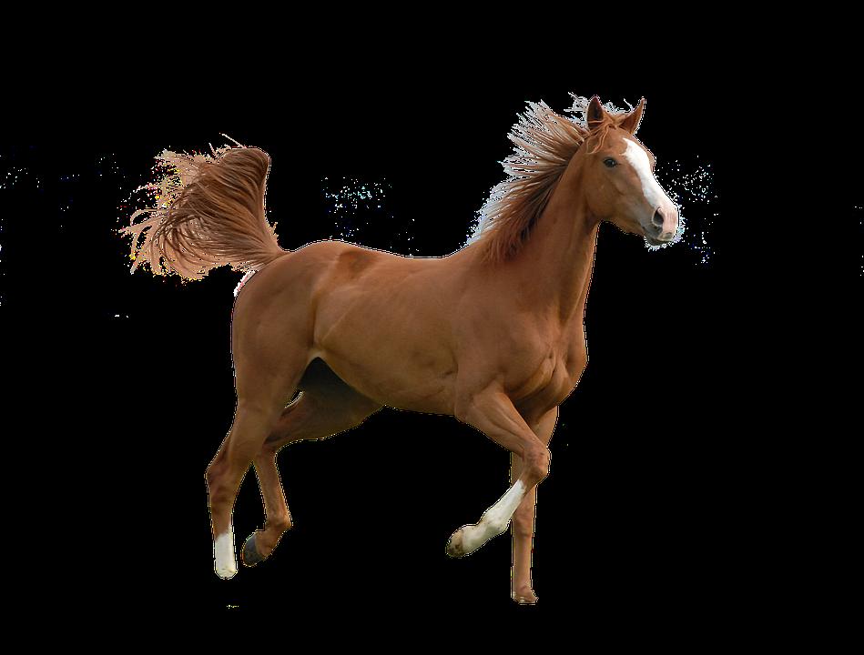 Horse, Animal, Isolated, Nature, Ride, Animal World