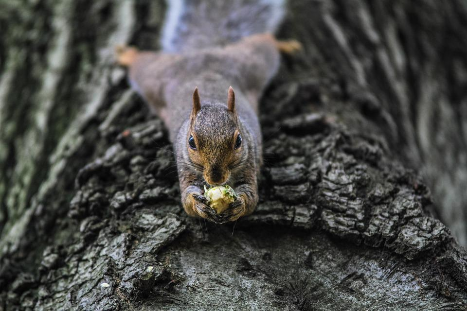 Animal, Squirrel, Nature, Rodent, Gray Nature