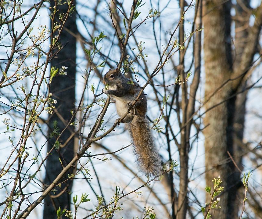 Nature, Tree, Outdoors, Wildlife, Animal, Squirrel