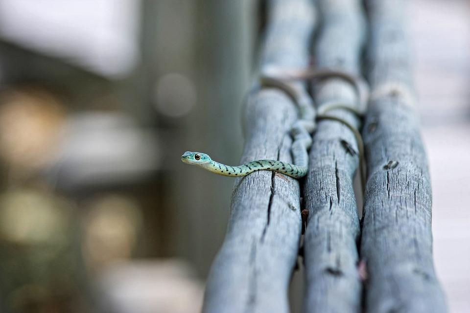 Snake, Animal, Nature, Toxic, Aggressive