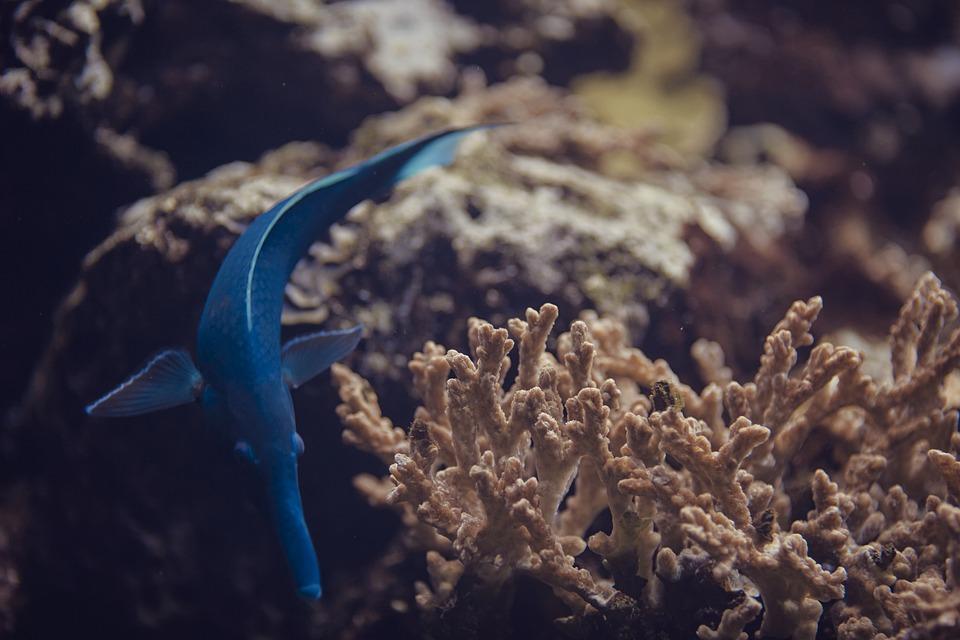 Fish, Blue, Underwater, Animal, Aquarium, Water, Nature