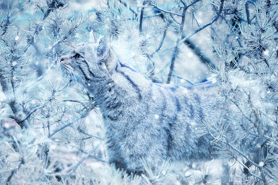 Animal, Wildcat, Snow, Nature, Art, Scrapbooking, Paper