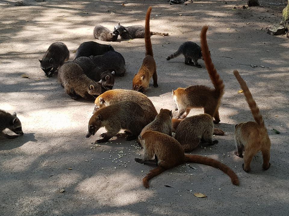 Animal, Nature, Wildlife