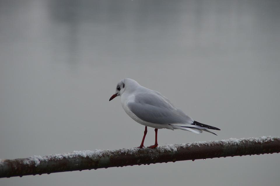 Bird, Nature, Animal World, Animal, Winter, Waters