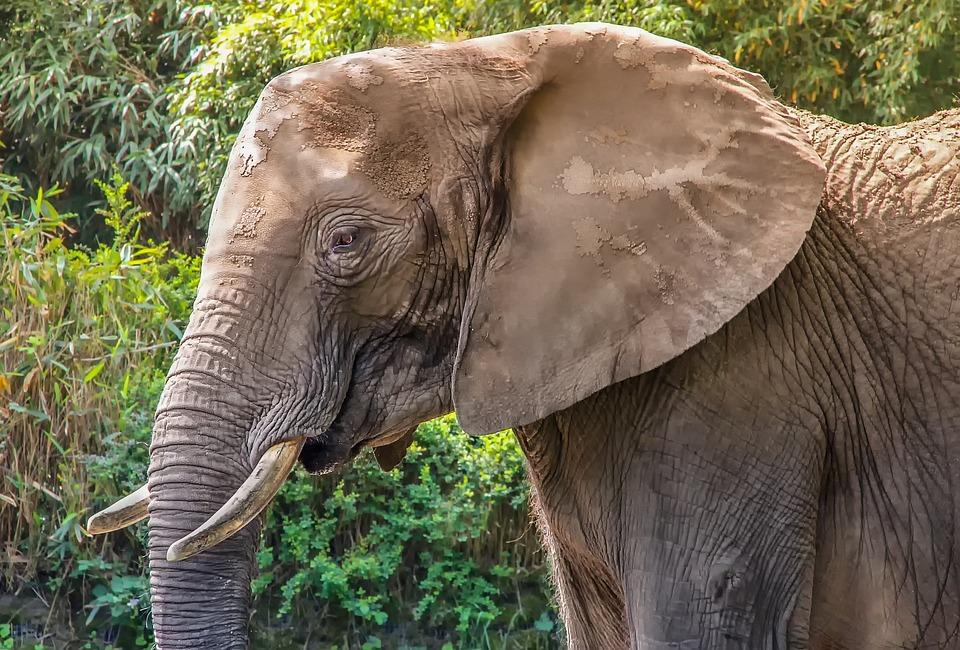 Nature, Animal, Mammal, Animal World, Elephant, Zoo