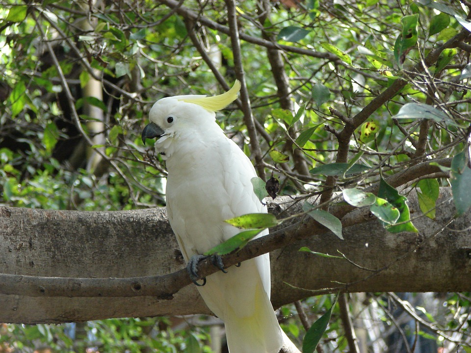 Bird, Nature, Animal World, Tree, Animal, Parrot