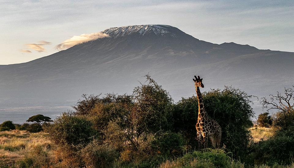 Africa, Kenya, Safari, Animal World, Wilderness, Nature