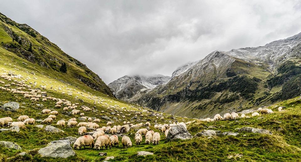 Animals, Grass, Landscape, Mountain, Nature, Outdoors