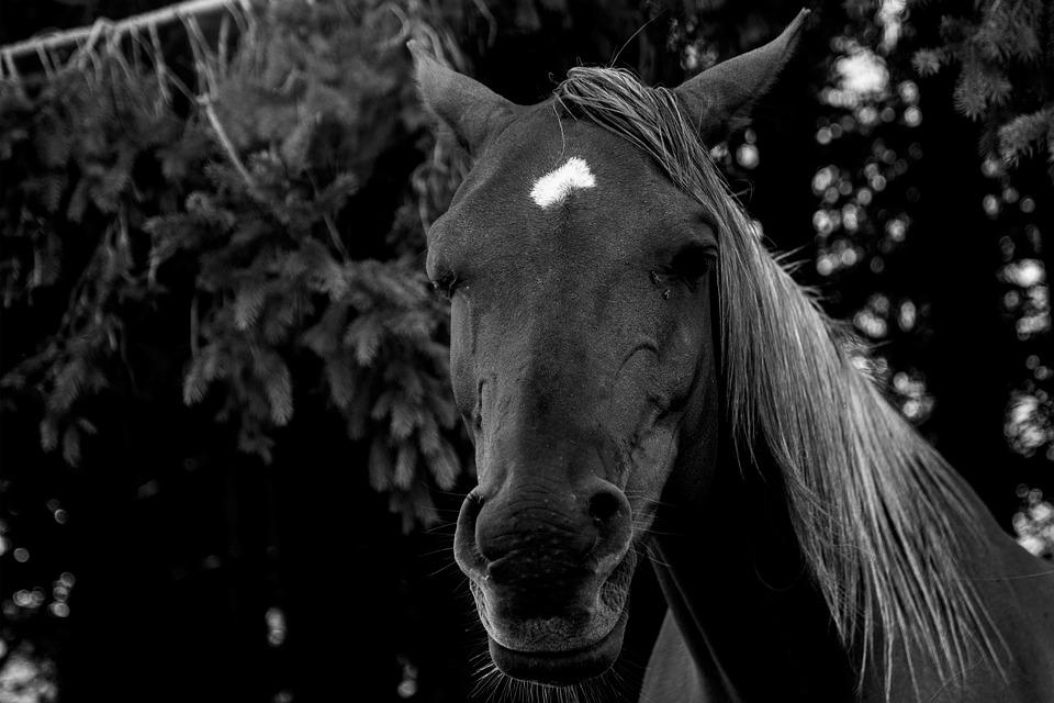 Horse, Animal, Horses, Animals, Nature, Pasture