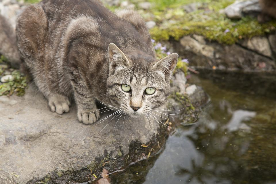 Cat, Animals, Nature, Cute, The Little Animals, Pets