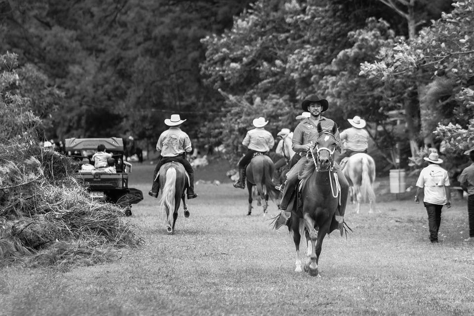Ranch, Horses, Horse, Farm, Animals, Nature, Stallion