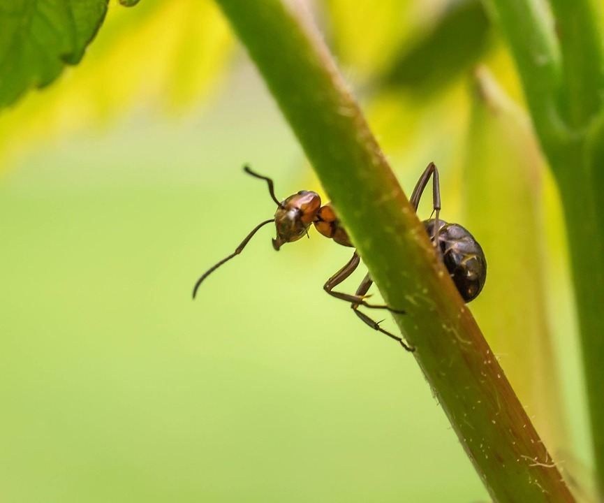 Nature, Ant, Insect, Forest