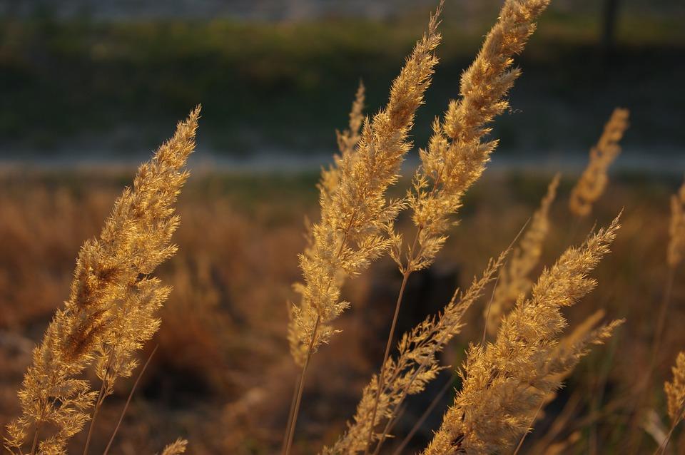 Arndt, Aorick, The Döberitz, Heide, Grass, Sun, Nature