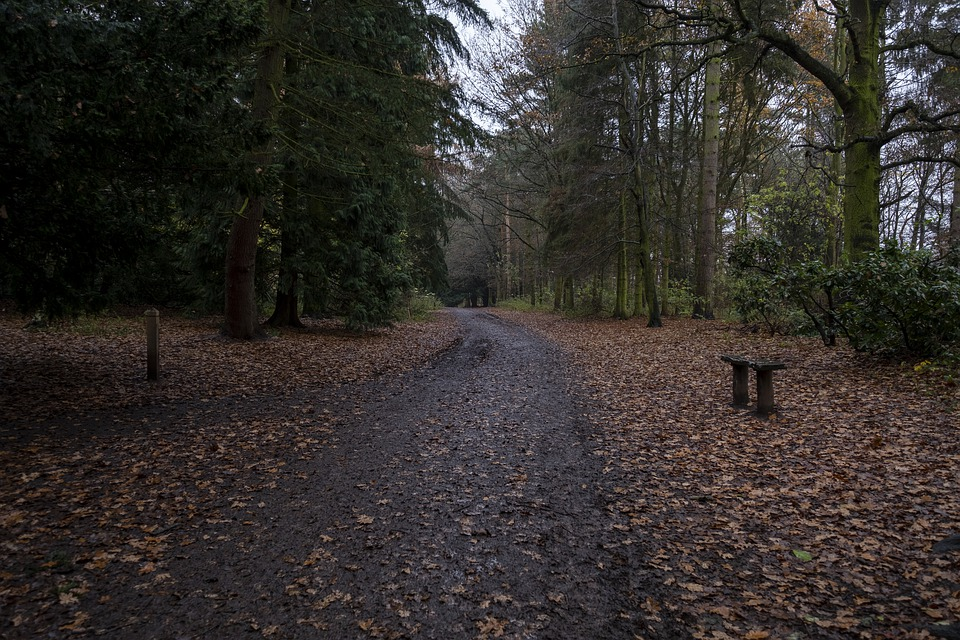 Apley, Woods, Trees, Forest, Nature, Landscape, Tree
