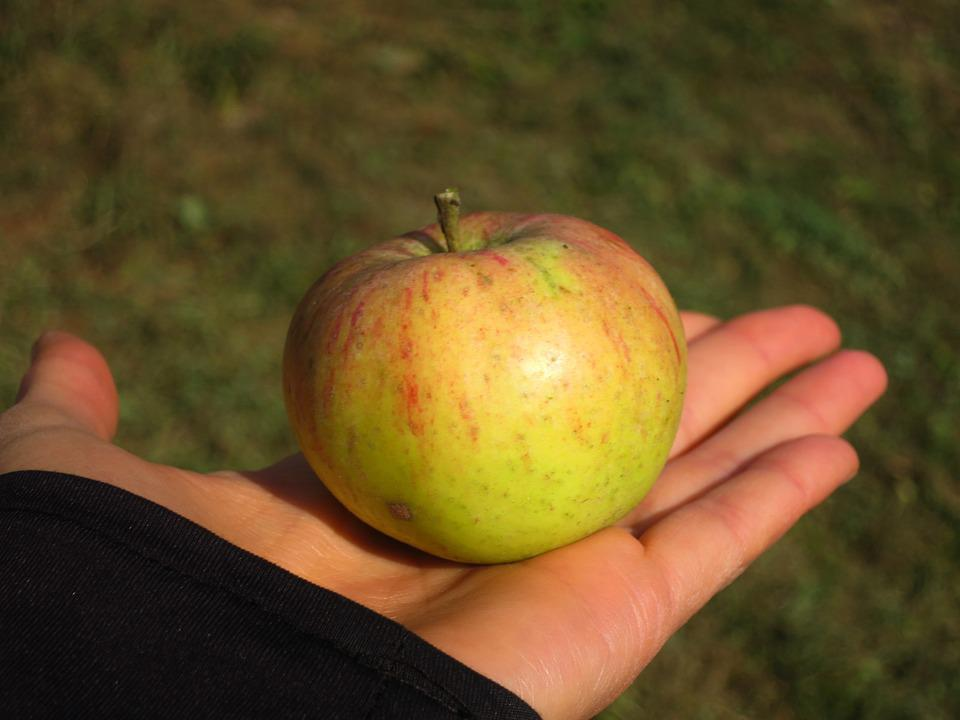Apple, Hand, Food, Healthy, Touch, Green, Red, Nature
