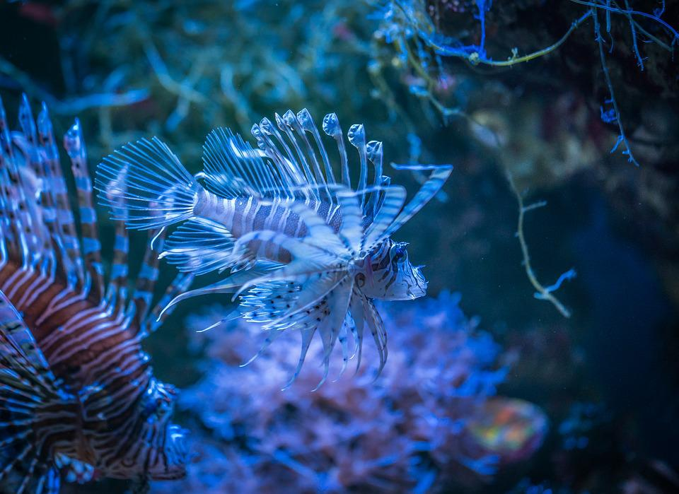 Fish, Aquarium, Nature, Undersea World