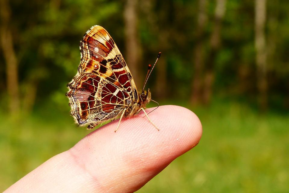 Nature, Insect, At The Court Of, Animals, Butterfly Day