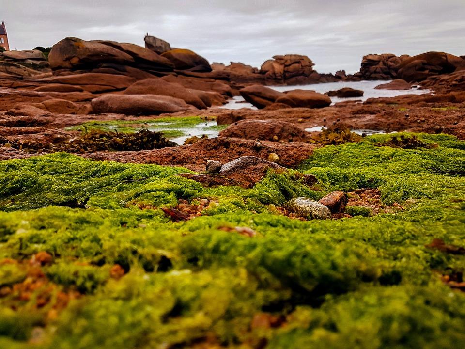 Brittany, Coast, France, Atlantic, Rock, Nature, Moss