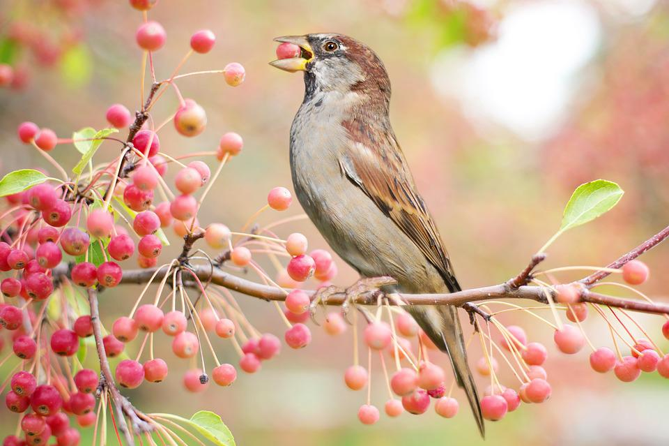 Bird, Autumn, Fall, Berries, Nature, Tree