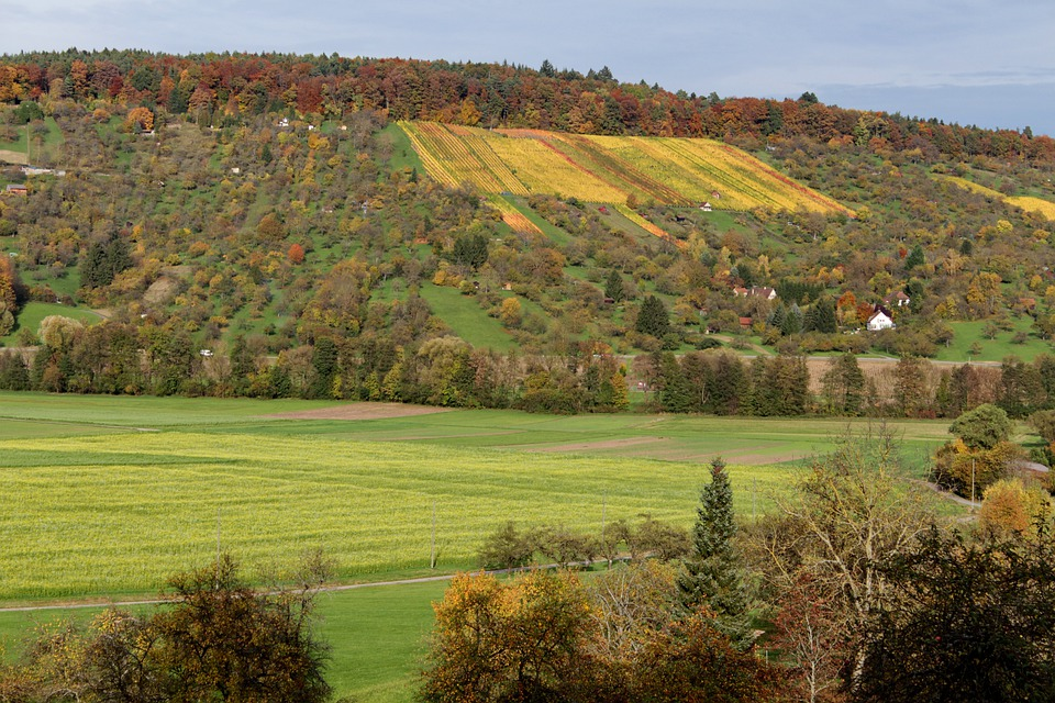 Autumn, Vineyard, Color, Out, Time Of Year, Nature
