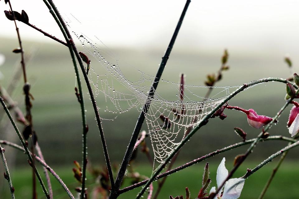 Drop Of Water, Dew, Dewdrop, Autumn, Leaf, Nature