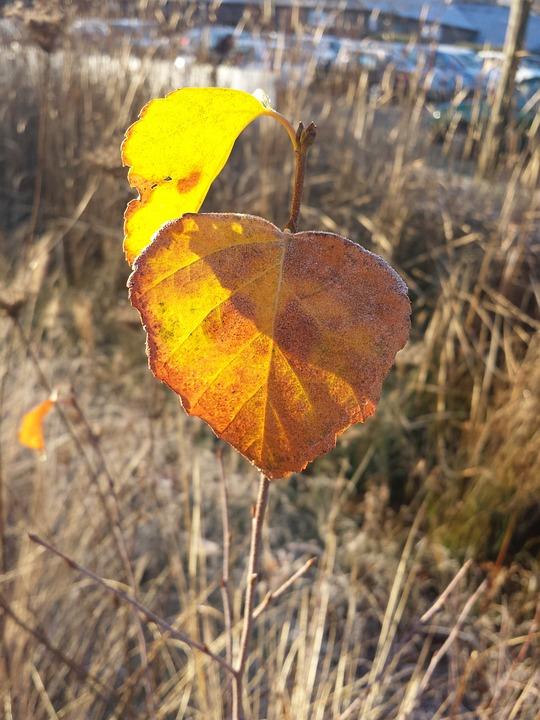 Nature, Autumn, Mood, Golden Autumn, Fall Foliage