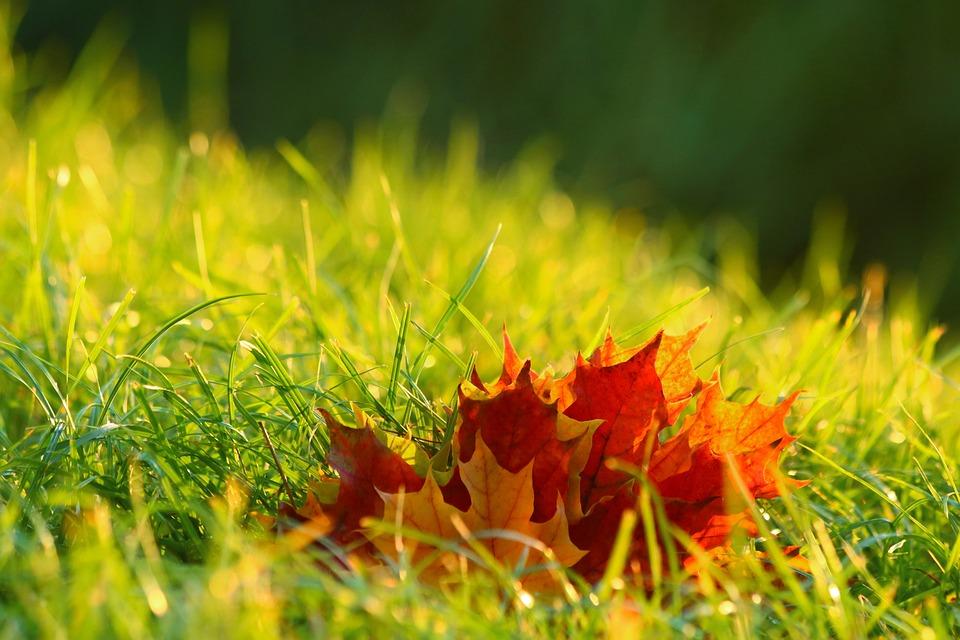 Foliage, Autumn, Colors, Mood, Nature, Grass