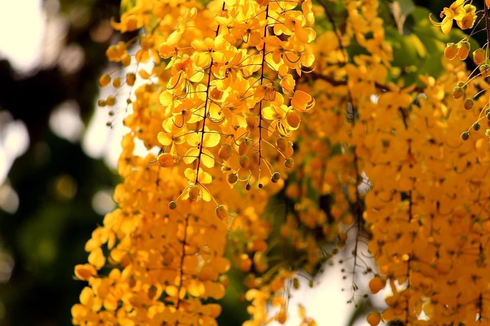 Autumn, Nature, Bright, Blur, Leaves, Outdoors, Foliage